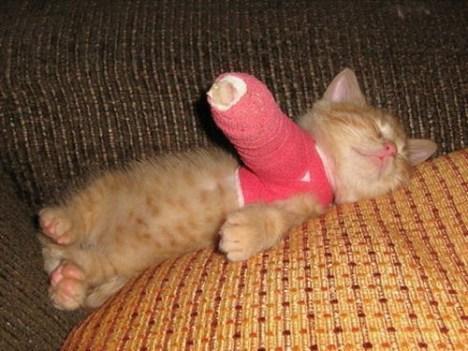 broken_leg_kitten