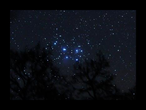 Pleiades trees